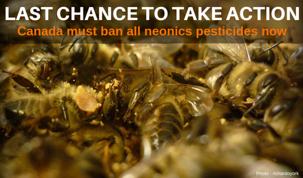 Canada must ban all neonics now! image