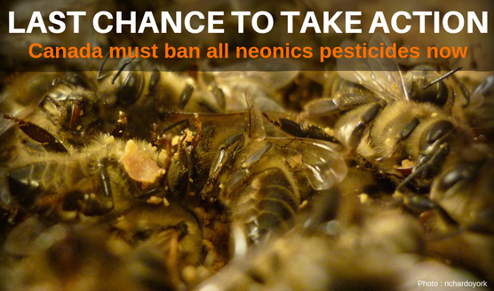 Canada must ban all neonics now!